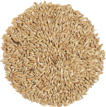 Premium Canary Seed